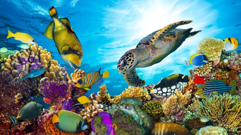 95% of existing ocean climates could disappear by 2100 if CO2 emissions continue to climb